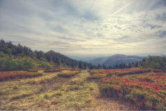 A view from mountain great arber. Bavaria Royalty Free Stock Image