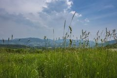 View of the mountain meadow. View of the mountain meadow on a Sunny summer day. Veneto, Italy stock photography
