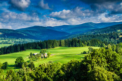 View of Mountain meadows and Forest at Sunset Stock Photography
