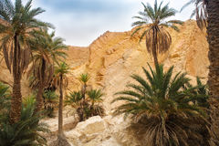 View of mountain oasis Chebika, Sahara desert, Tunisia Stock Image