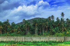 View on Mountain with palms in Siargao island, the Philippines. stock photo