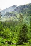 View of the mountain peak from forest Stock Images