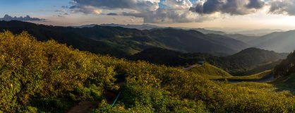 View of mountain peaks, coniferous tropical forest. Panorama. View of mountain peaks, coniferous tropical forest and green meadow in summer landscape. Sunset in Royalty Free Stock Images