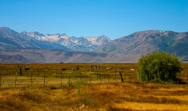 A view of mountain ranch in western USA Royalty Free Stock Images