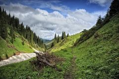 Snow from the avalanches in the gorge. View of a mountain river in the gorge with snow from the avalanches stock images