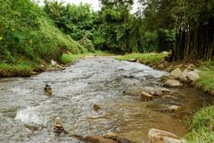 View on a mountain river in rainforest. royalty free stock images
