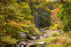 View of mountain stream with autumn colors Royalty Free Stock Photography