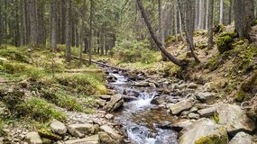 A view of a mountain stream that flows down a slope of stones Stock Images