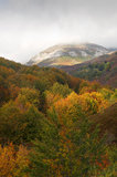 View of the mountain trees with fall colors Royalty Free Stock Photography