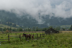 View of a mountain village located in the valley. Holiday green tourism ecological rest. Wooden houses, horses, fog, summer, morning Stock Images