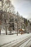 Autumn snow. stock images
