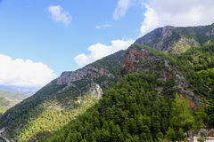 View of mountains covered with pine forests. View of mountains covered with evergreen pine forests with blue sky and clouds Stock Photo