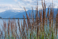 View on mountains and lake Geneva. Grass against mountains and lake Geneva from the Embankment in Montreux. Switzerland Royalty Free Stock Photos