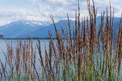 View on mountains and lake Geneva Royalty Free Stock Photos