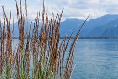 View on mountains and lake Geneva Royalty Free Stock Photo