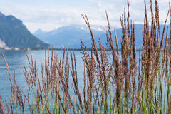 View on mountains and lake Geneva. Grass against mountains and lake Geneva from the Embankment in Montreux. Switzerland Stock Image