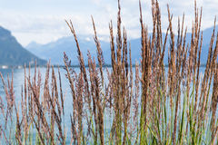 View on mountains and lake Geneva. Grass against mountains and lake Geneva from the Embankment in Montreux. Switzerland Royalty Free Stock Photo