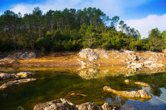 View of mountains river with forest riverside Stock Images
