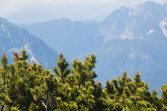 View on mountains and small pines from Krippenstein Plateau in Austrian  Alps Stock Photography