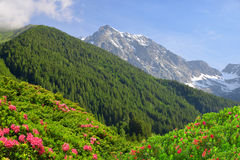 View of the mountains from the valley Antholzertal. Stock Images