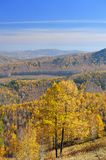 View from mountaintop on golden larchs and valley Stock Photo