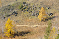 View from mountaintop on path between two larch Royalty Free Stock Images