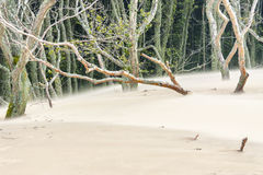 View on movement dunes - Leba. Royalty Free Stock Photography