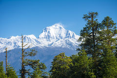 View of Mt. Dhaulagiri. 8,172m from Poonhill, Nepal royalty free stock images