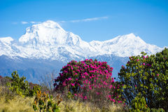 View of Mt. Dhaulagiri. 8,172m from Poonhill, Nepal royalty free stock photos