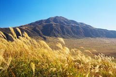 View of Mt. Eboshi-dake with silver grass at Autumn in Aso. An image of nature Royalty Free Stock Images