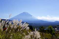 A view of Mt. Fuji in autumn and Japanese pampas grass Stock Photography