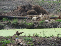 View of the mud field and the basin Stock Photography
