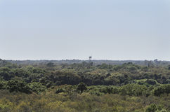 View from Myakka Canopy Walkway Stock Photography