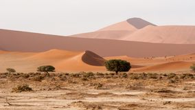 View of the Namib dunes stock images