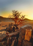 A view of the Namib Naukluft desert with an isolated tree against a sunset Stock Image