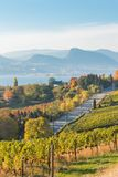 View of Naramata Road and vineyards with Okanagan Lake and mountains in autumn stock photography