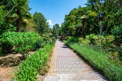 Promenade alley with flowers and green palm trees. View of narrow alley in the park with lush green vegetation. Summer walk concept royalty free stock photo