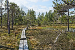 View of a narrow trail of planks passing through the Viru Raba bog in Estonia in forest of pines HDR image. View of a narrow trail of planks passing through the Stock Photos