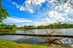 View of national lake park with dry tree on foreground Royalty Free Stock Photos