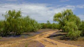 View of native scrub woods Spanish bluebells ground cover flower, near Castile de Dona Blanca, El Puerto de Sante Maria, Andalucia. Spain stock photo