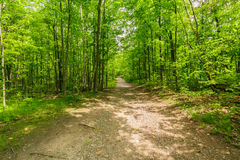 View of natural fresh green forest with trail, path, landscape in Ontario Halton Hills. Beautiful view of natural fresh green forest with trail, path, landscape stock images