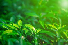 View of natural green foliage royalty free stock image