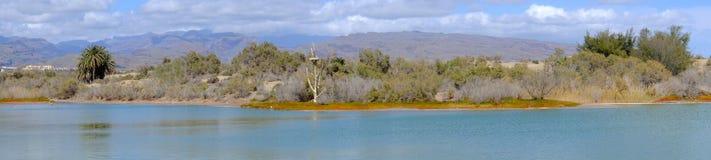 View on the natural reserve La Charca on Maspalomas, Gran Canari Royalty Free Stock Images