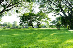 View of natural  tree and grass field Royalty Free Stock Photography