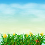 A view of nature with blooming flowers Stock Photography