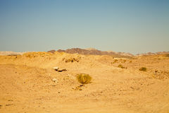 View of the nature reserve Ras Mohammed in Egypt. Selective focu Stock Images