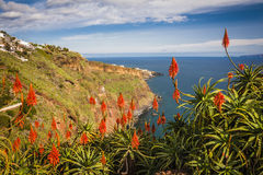 View near Funchal town, Madeira island, Portugal Royalty Free Stock Photo