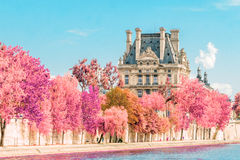 View near the Seine in Paris, Louvre, France. Infrared shot (pink trees Stock Photography