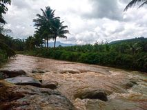 Rain forest North thailand tree nature stream. View near stream located in changmai stock images
