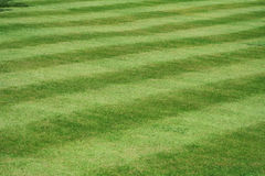 A view of a neatly mown lawn, 45 deg to the stripe, 15 stripes